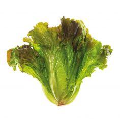Lattuga salanova g 150